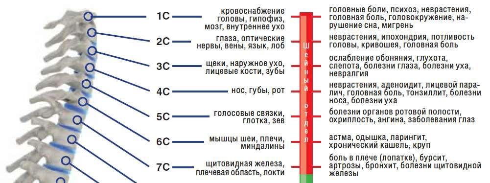 Симптомы при различных защемлениях в шейном отделе